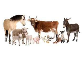 feed grade amino acids